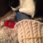 cats and knitting...zzzzz